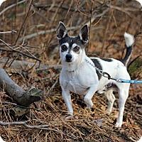 Adopt A Pet :: Bandit - Tinton Falls, NJ