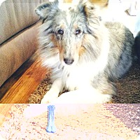 Adopt A Pet :: Ellie Mae (WV) - Alderson, WV