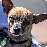 Adopt A Pet :: Ella - San Marcos, CA