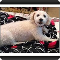 Adopt A Pet :: Adopted!! Marco - GA - Tulsa, OK