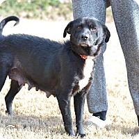 Adopt A Pet :: Tawil - Acworth, GA
