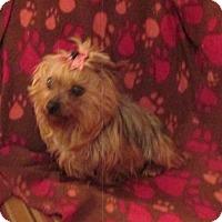 Adopt A Pet :: JULPIX - WOODSFIELD, OH
