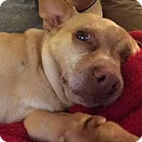 Adopt A Pet :: Cosette - Vista, CA