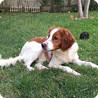 Adopt A Pet :: ERIC - La Mirada, CA