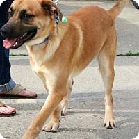 Adopt A Pet :: Louie - Sugar Grove, IL