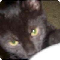 Adopt A Pet :: Jenny - Dewey, IL