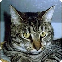 Adopt A Pet :: Cody - Medway, MA