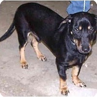 Adopt A Pet :: Buster - Toronto/Etobicoke/GTA, ON