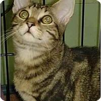 Adopt A Pet :: Ben - Chesapeake, VA