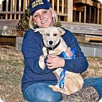 Adopt A Pet :: Blizzard - Cashiers, NC