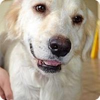 Adopt A Pet :: Annabelle - Roanoke, VA
