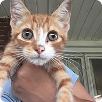 Adopt A Pet :: Chase - McDonough, GA