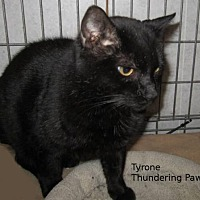 Adopt A Pet :: Tyrone - Drippings Springs, TX