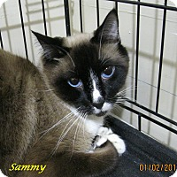 Adopt A Pet :: Sammy - Chisholm, MN