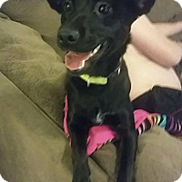 Adopt A Pet :: Bella - Rexford, NY