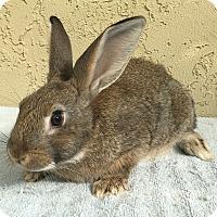 Adopt A Pet :: Baby boy - Bonita, CA