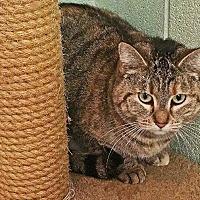 Adopt A Pet :: Lola - Crossville, TN
