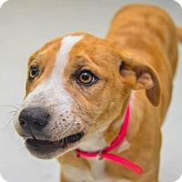 Adopt A Pet :: Oprah - Pittsburg, KS