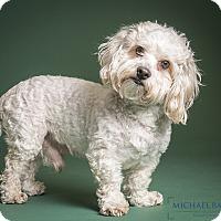 Adopt A Pet :: Boo Boo easy peasy - Norwalk, CT