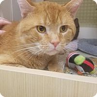 Adopt A Pet :: Carrot Top - Warren, MI