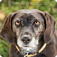 Adopt A Pet :: Marge - Sheboygan, WI