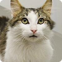 Adopt A Pet :: Tripp - Springfield, IL