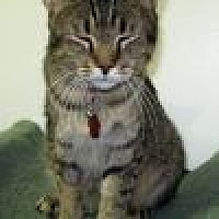 Adopt A Pet :: Homer - Powell, OH