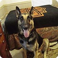 Adopt A Pet :: Gracey - Green Cove Springs, FL