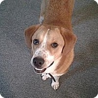 Adopt A Pet :: Pippin - Hamilton, ON