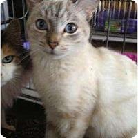 Adopt A Pet :: Isabella - Mobile, AL
