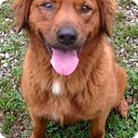 Adopt A Pet :: Jules - Windam, NH
