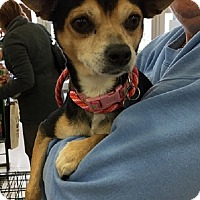 Adopt A Pet :: Jolly - Rockaway, NJ