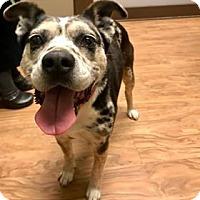 Adopt A Pet :: Wanda - Jasper, GA