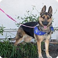 Adopt A Pet :: Lani - San Diego, CA