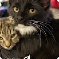 Adopt A Pet :: Agna - Newport, KY