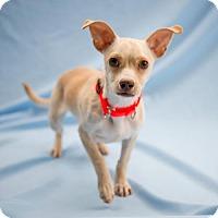 Adopt A Pet :: Farfetch'd - Atlanta, GA