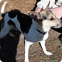 Adopt A Pet :: Jake - Savannah, GA