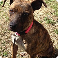 Adopt A Pet :: Nikki Renee - Raleigh, NC
