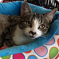 Adopt A Pet :: Colleen - Port Republic, MD