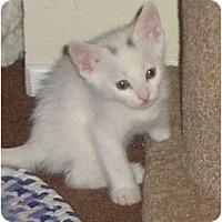 Adopt A Pet :: Spots - lake elsinore, CA