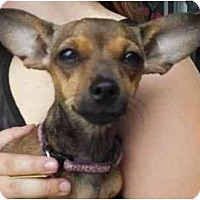Adopt A Pet :: Honey Bunny - Los Angeles, CA