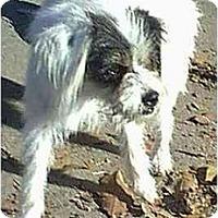 Adopt A Pet :: PENELOPE - dewey, AZ