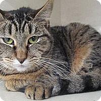 Adopt A Pet :: Alibi - Riverhead, NY