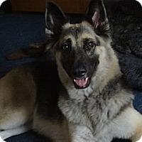 Adopt A Pet :: Faith - Green Cove Springs, FL