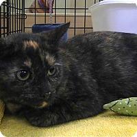Adopt A Pet :: Willow - St. Louis, MO