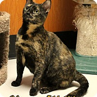 Adopt A Pet :: Eleanor - Tiffin, OH