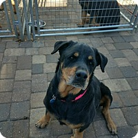 Adopt A Pet :: Eternity - New Smyrna Beach, FL