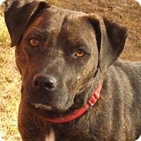 Adopt A Pet :: Marsh - Oxford, MS