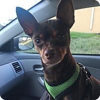 Adopt A Pet :: Tio - Essington, PA
