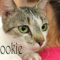 Adopt A Pet :: Snookie - Wichita Falls, TX